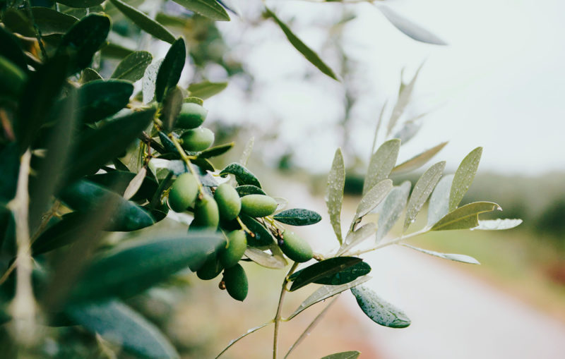 Every year the harvest is crafted into Hunter's Dream pure, fresh certified Extra Virgin Olive Oil.